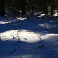 Первый снег :: MarinaZi .
