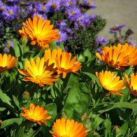 Яркие осенние цветы :: Татьяна Смоляниченко
