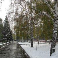 Первый снег :: Наталья Кочетова