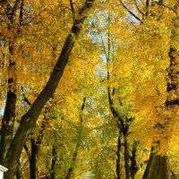 липовая алея в монастыре :: Сергей Кочнев