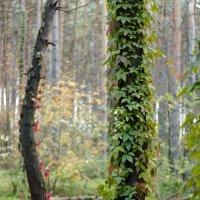 краски природы 3 :: Геннадий Свистов