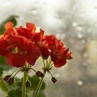 А за окном дождь идет... :: Елена Пономарева