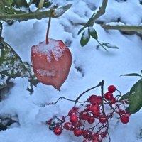 ягоды на снегу :: Елена
