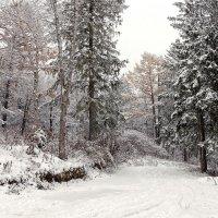 Первый снег на желтый лист упал... :: Сергей Калиновский