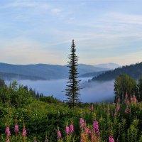 А в долине туман :: Сергей Чиняев