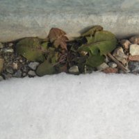 снег не помеха :: игорь