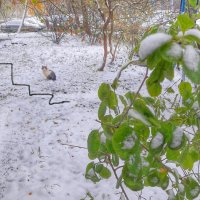 Утро ноября :: Ирина Крохмаль