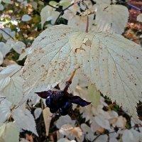 Осенние листья ... :: Владимир Икомацких