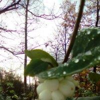 Плоды осени. :: Светлана Калмыкова