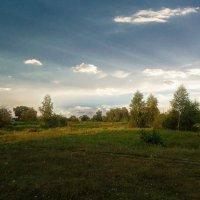 Летняя поляна :: Виктория Власова