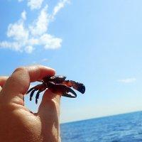 НАДводная часть летних приключений:)  (Ни один краб не пострадал!) :: Дарья Казбанова