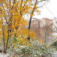 Снег в октябре 25 :: Виталий