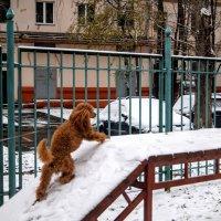 Покорение снежной вершины. :: Larisa Ereshchenko