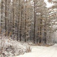 Заколдован невидимкой, дремлет лес под сказку сна... (С.Есенин) :: Сергей Калиновский