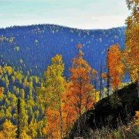 Сентябрь в горах :: Сергей Чиняев