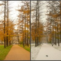Осень-зима в два дня :: Galina Belugina