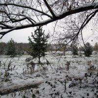графика первого снега... :: Галина Флора