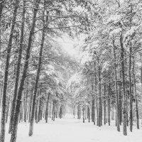 Зимний лес :: Вячеслав Баширов