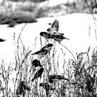 Птички в бурьяне :: Екатерина Торганская
