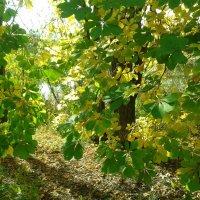 Осень в Ботаническом саду :: наталия