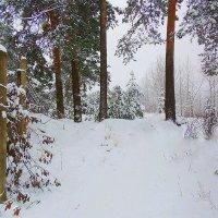 Зимний лес :: Павлова Татьяна Павлова