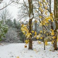 Снег в октябре 28 :: Виталий