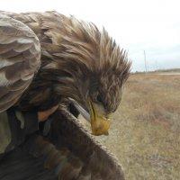 шикарная птица :: игорь
