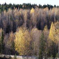 Рускеальский лес. :: Лазарева Оксана