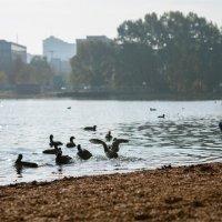 птицы в городе :: Grigory Spivak
