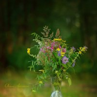 Лесной натюрморт :: Оксана Анисимова