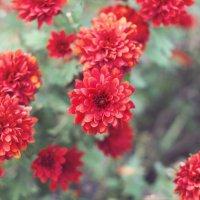 цветы :: Наталья Грикурова