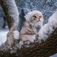 Элизабет и первый снег :: Нина