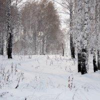 Зимнее :: Наталья Сорокина
