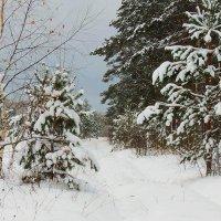 Зимними тропинками :: Павлова Татьяна Павлова