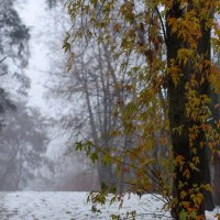Снег в ноябре.... :: Елена Фролкова