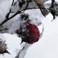 Малина под снегом :: Avada Kedavra!