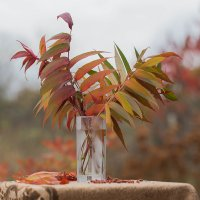 Осенние листья :: Елена Ахромеева