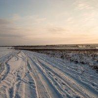 Снежок. :: Павел Кореньков