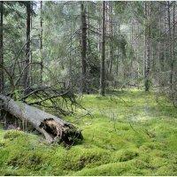 Тишина леса :: Флоуффлурр Рроуфф-Ниирсс