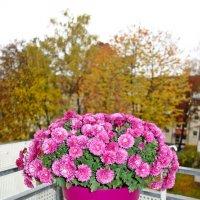 Осень на моем балконе... :: Galina Dzubina