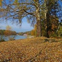 Листья шумят под ногой... :: Galina Dzubina