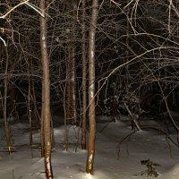 Из ночных прогулок по лесу :: Сергей Шаврин