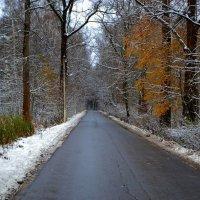 .. дорога в лес.. :: Victor