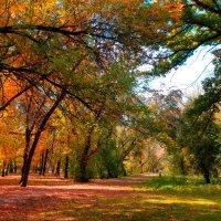 Из лета в осень :: Оксана Н.