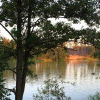 На лесном озерке. :: Laborant Григоров
