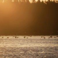 прощание с озером :: liudmila drake