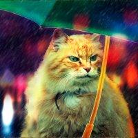 кот в городе :: Наталия П
