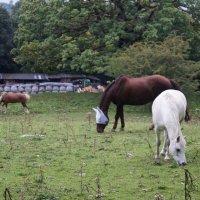 Три лошади :: Natalia Harries