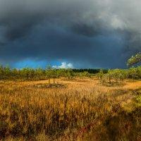 Осенняя гроза на болоте :: Фёдор. Лашков