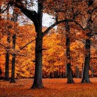 Осенние этюды-2 :: Gene Brumer